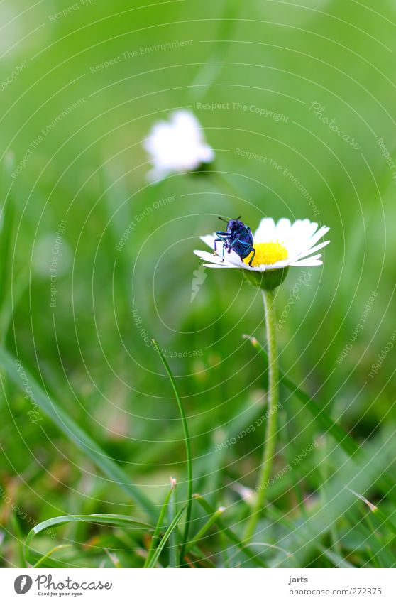 my blue is beautiful Nature Plant Animal Flower Grass Meadow Wild animal 1 Crawl Natural Beautiful Blue Cool (slang) Colour photo Exterior shot Close-up