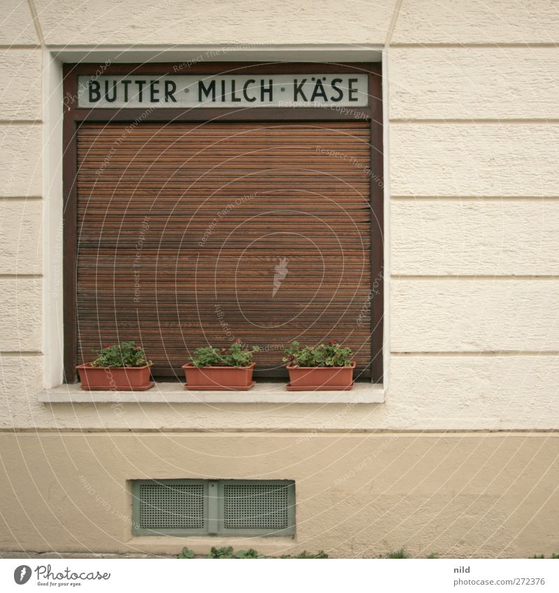 BUTTER - MILK - CHEESE Food Butter Milk Cheese Plant Foliage plant Pot plant Village Town Deserted House (Residential Structure) Wall (barrier) Wall (building)
