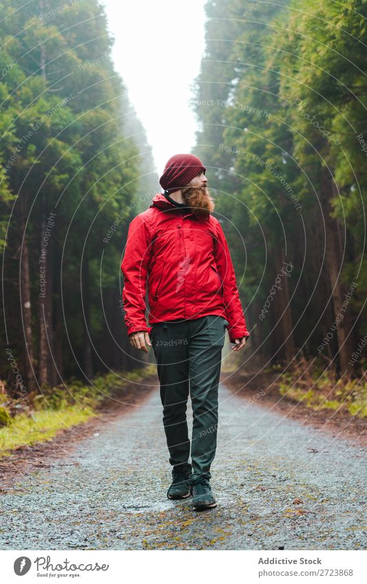 Hiker in forest with Tourist Nature Man Walking Street Red Jacket Forest Green Vacation & Travel Adventure Landscape Hiking Azores Exterior shot Vantage point