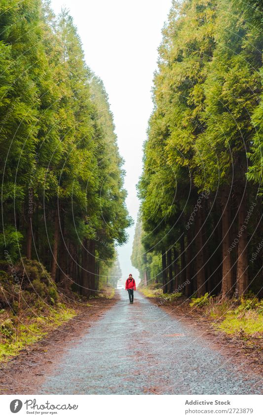 Hiker in forest with hands up Tourist Nature Man Hands up! Walking Street Red Jacket Forest Green Vacation & Travel Adventure Landscape Hiking Azores
