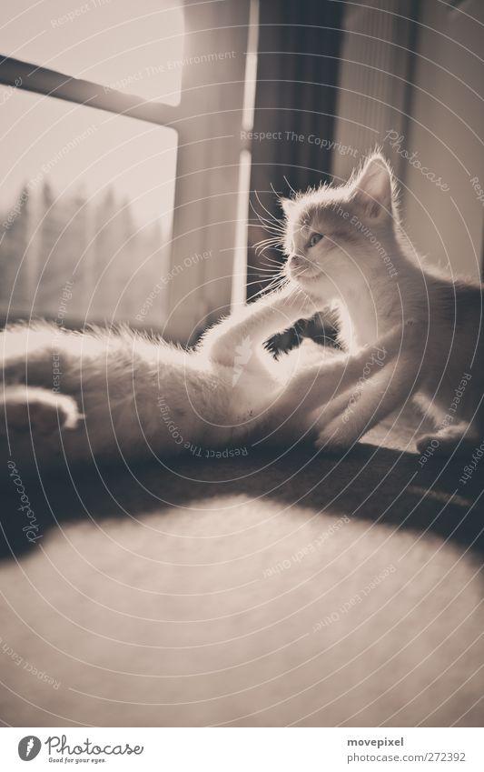 Cat Joy Animal Playing Baby animal Pelt Pet Cuddly Embrace Kitten