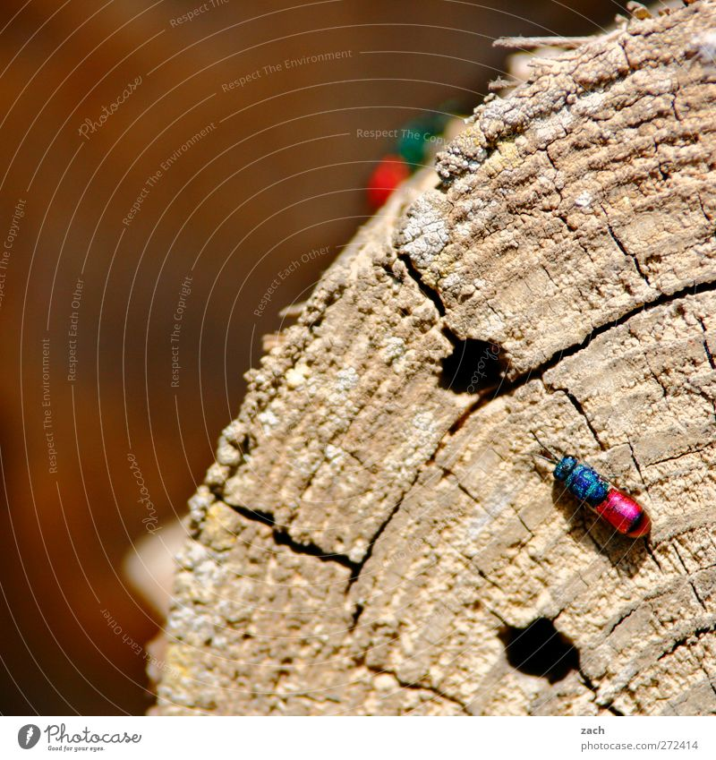 Check in at Insektenhotel Plant Tree Tree trunk Wood Annual ring Animal Beetle Wing Insect gold wasp 1 Crawl Blue Pink Hollow insect hotel Colour photo