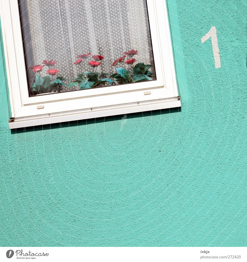Flowers adorn life... Lifestyle Living or residing Flat (apartment) Decoration Window Deserted House (Residential Structure) Facade Curtain Window frame