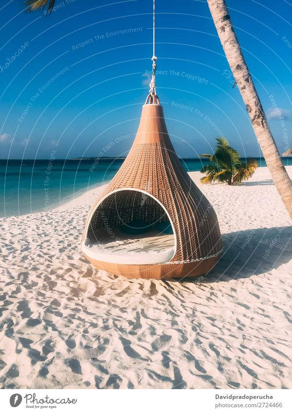 Maldives island luxury resort palm tree with hanging hammock Island Beach Hammock Palm tree Luxury Resort Idyll Heaven treepod Paradise Beautiful Swing Sun Reef