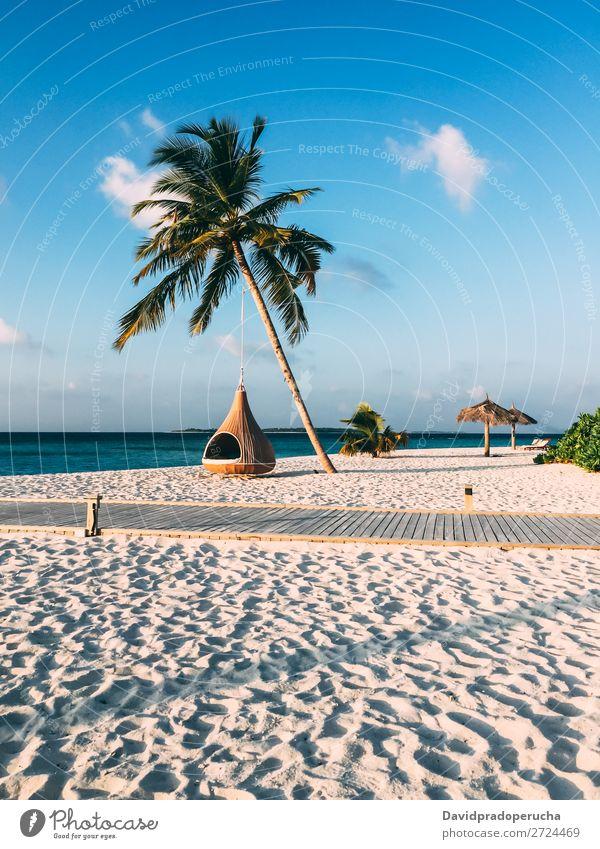 Maldives island luxury resort palm tree with hanging hammock Island Beach Hammock Palm tree Luxury Resort Idyll Heaven treepod Paradise Beautiful Swing Sun Reef
