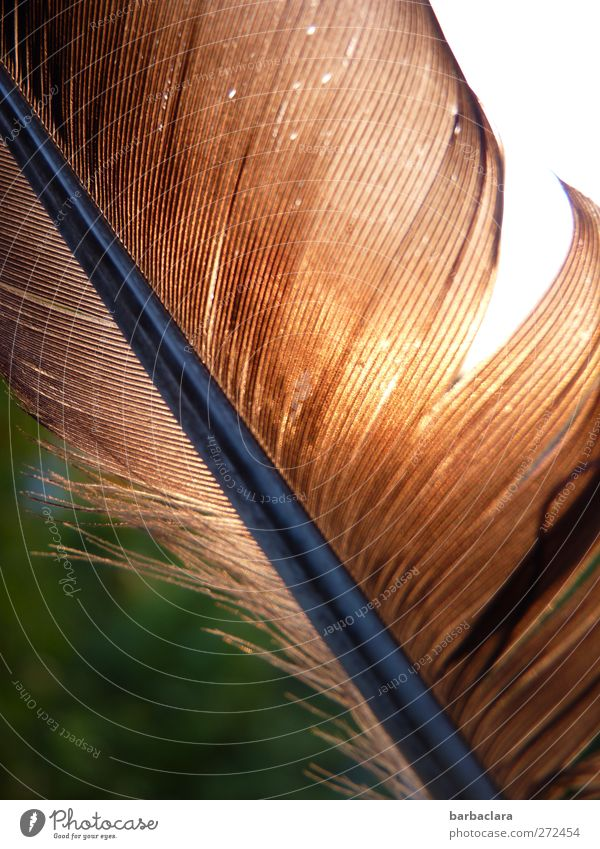 I was at the top Environment Nature Sun Bird Feather To fall Flying Illuminate Lie Esthetic Free Glittering Brown Gold Movement Freedom Ease Transience Change