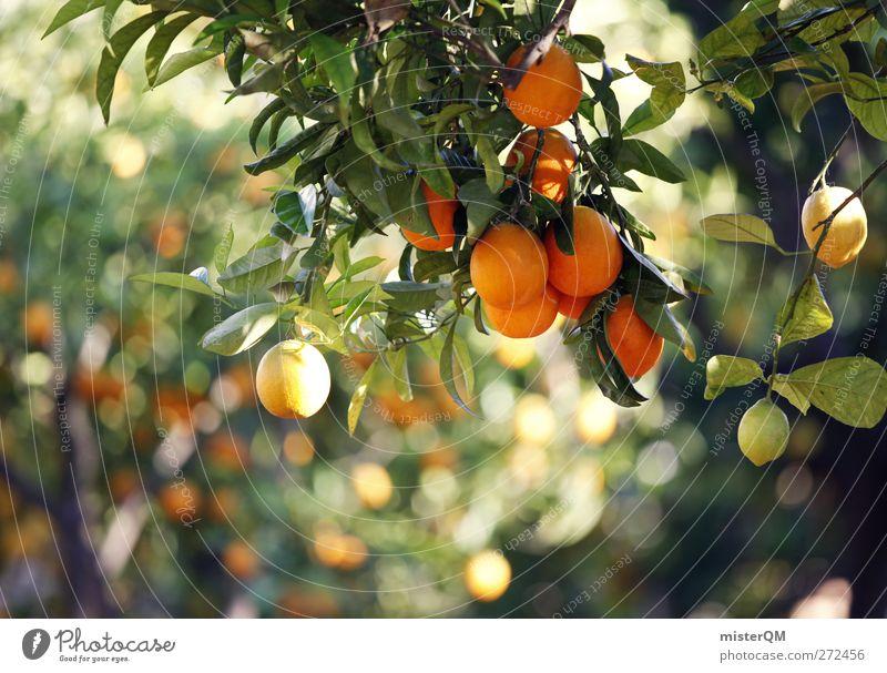 Orange Garden II Nature Climate Climate change Beautiful weather Plant Tree Esthetic Orange juice Orange tree Orangery Mature Healthy Growth Food Ecological