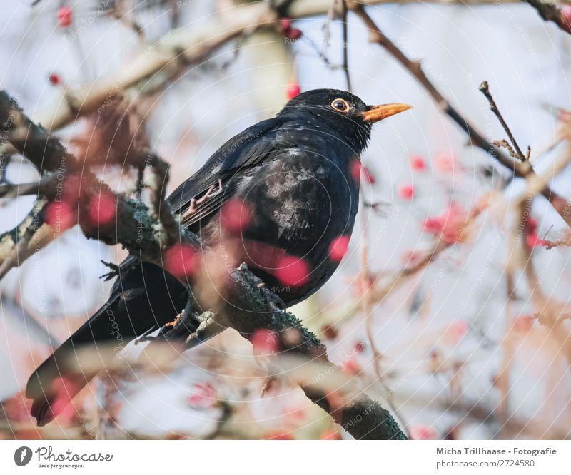 Sky Nature Blue Red Tree Animal Black Environment Eyes Natural Orange Bird Fruit Glittering Wild animal Sit