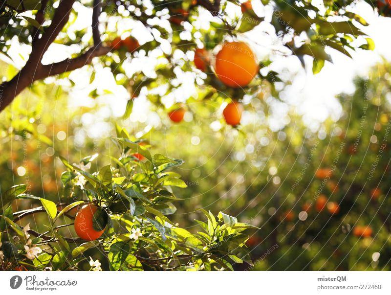 Orange Garden IV Environment Nature Landscape Plant Esthetic Contentment Orange juice Orange peel Orange tree Orangery Orangerie Fruit Hang Mature Green South