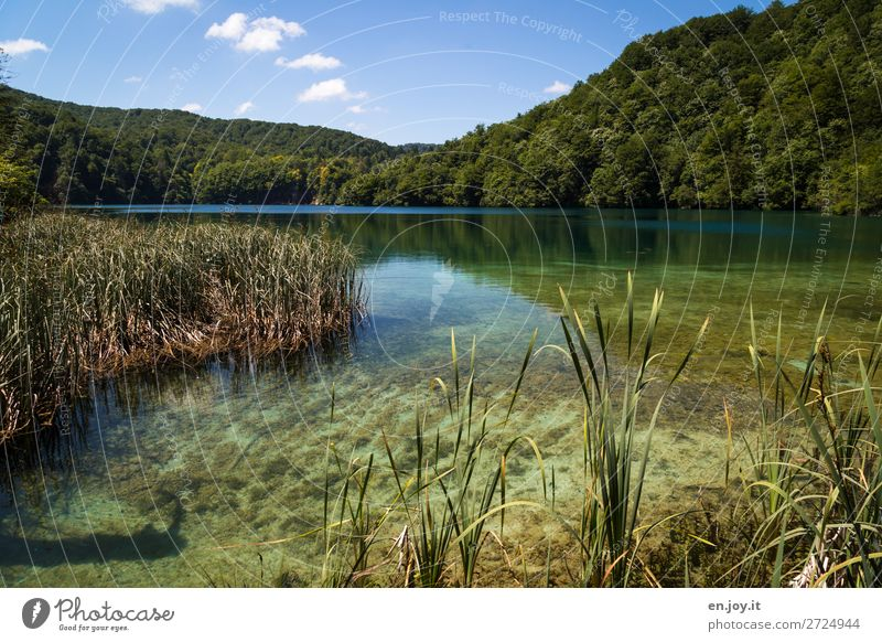 Sky Vacation & Travel Nature Summer Green Water Landscape Calm Forest Environment Lake Trip Idyll Beautiful weather Hill Lakeside