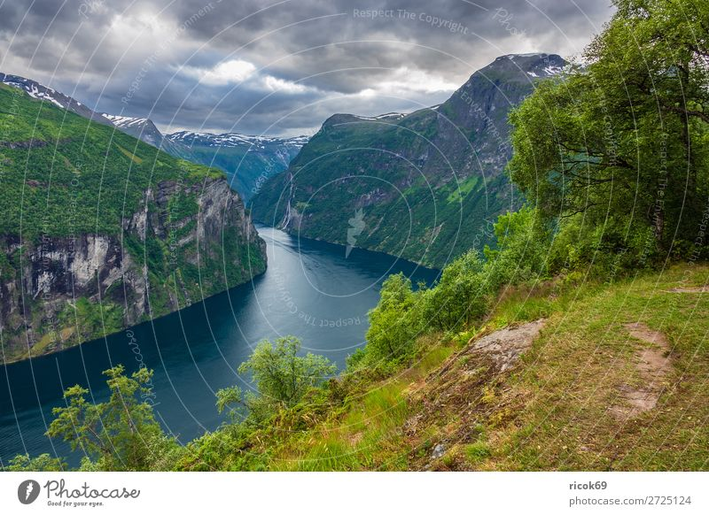 View of the Geirangerfjord in Norway Relaxation Vacation & Travel Tourism Cruise Mountain Nature Landscape Water Clouds Tree Rock Fjord Tourist Attraction Idyll