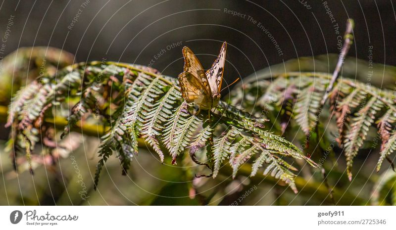 Butterfly in the sunlight Adventure Expedition Nature Sun Sunlight Spring Summer Beautiful weather Bushes Leaf Garden Park Meadow Forest Animal Wild animal