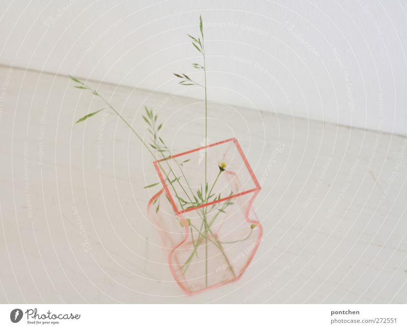 Transparent vase filled with a few stalks. Minimalism Interior design Decoration Plant flowers Grass Bouquet Plastic Bright Gloomy Pink White Purity Thrifty