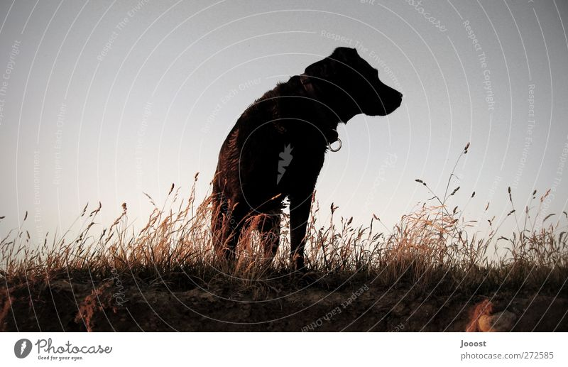 Dog Sky Nature Blue Summer Animal Far-off places Landscape Dark Warmth Above Grass Gray Think Orange Earth