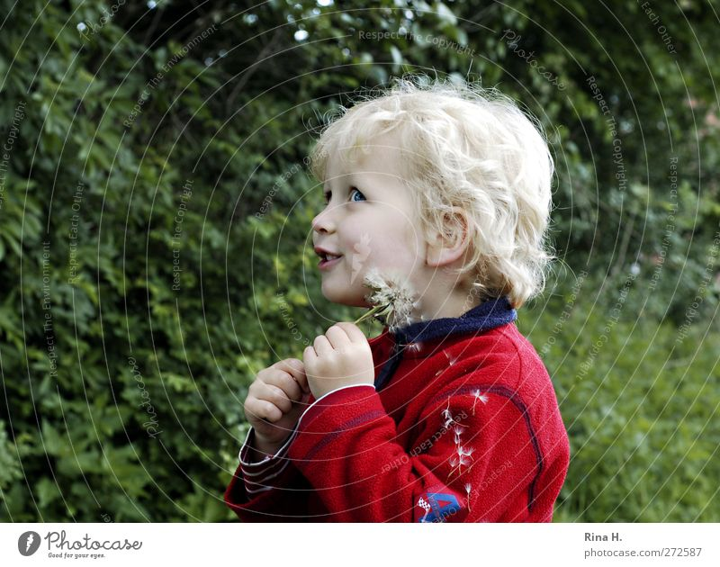 Human being Child Green Red Joy Playing Spring Boy (child) Happy Blonde Infancy Natural Happiness Beautiful weather Smiling Dandelion