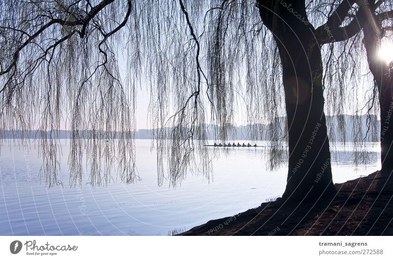 Blue Water Black Landscape Cold Lake Contentment Trip Hamburg Idyll Lakeside Rowing Rowboat Alster