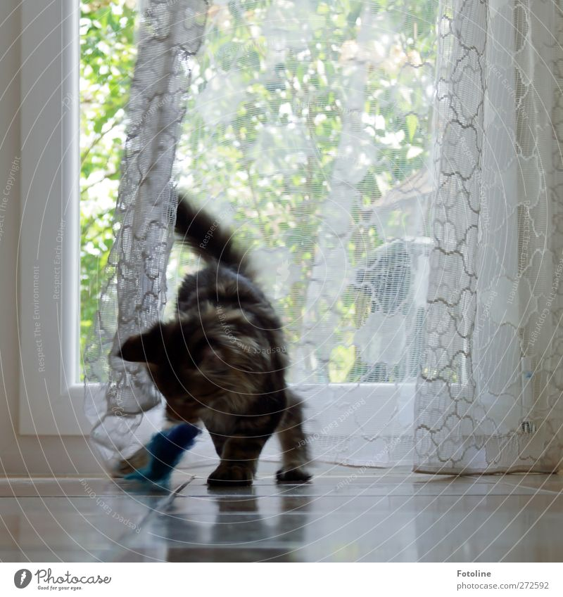 Cat Animal Window Playing Bright Cute Cloth Soft Curiosity Pelt Pet Paw