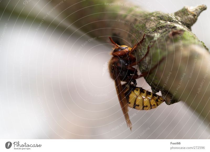 The battle for survival of a hornet Nature Air Water Spring Branch Lakeside Wild animal 1 Animal Wood Aggression Threat Large Natural Brown Yellow Green Brave