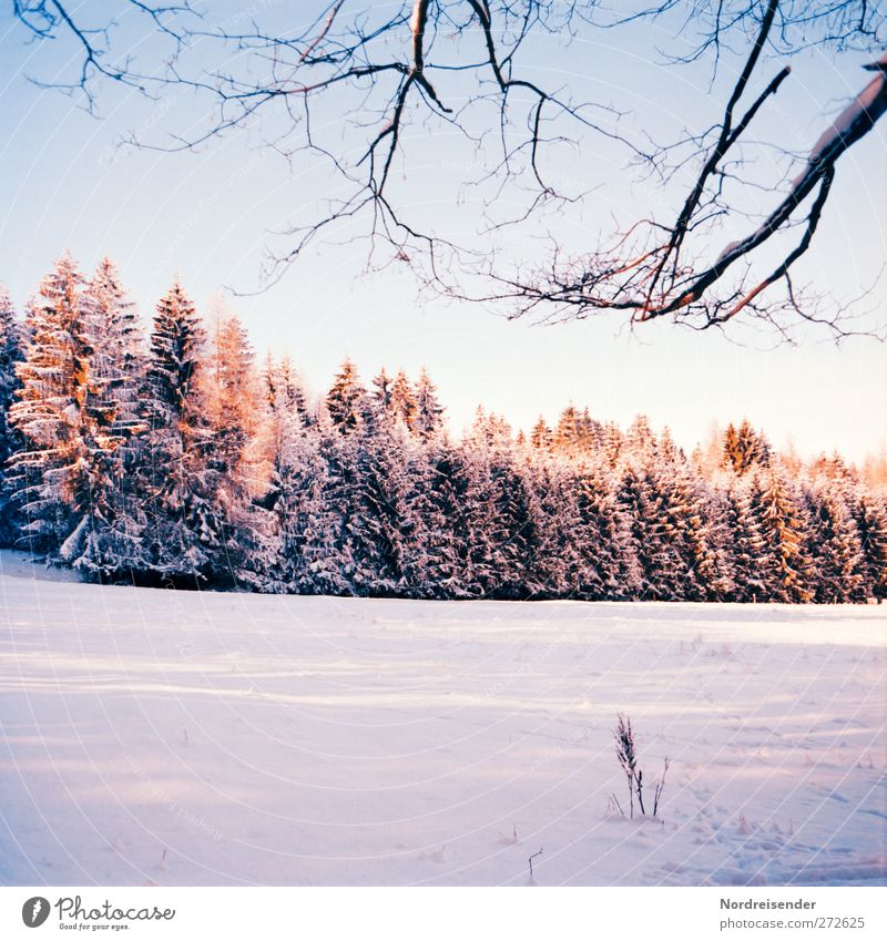 winter evening Senses Calm Winter Snow Winter vacation Nature Landscape Plant Sunlight Climate Weather Beautiful weather Ice Frost Tree Forest Observe Hiking