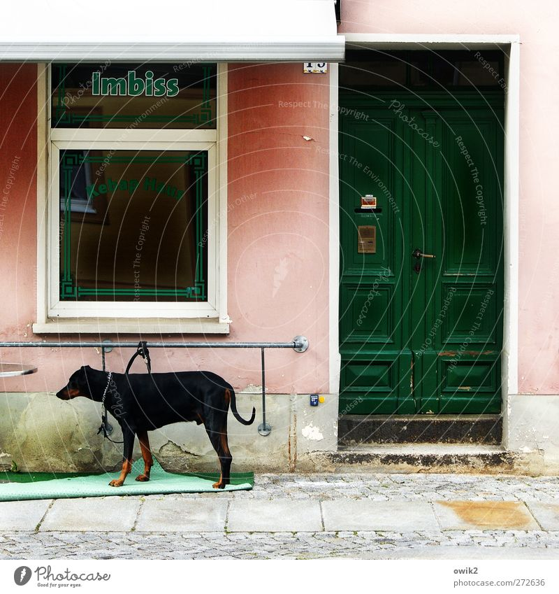 Dog Green Red Animal Loneliness Black Window Wall (building) Gray Wall (barrier) Sadness Door Pink Facade Wait Stairs