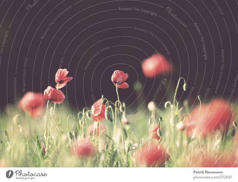 Nature Green Red Plant Summer Flower Animal Black Environment Landscape Blossom Dream Healthy Field Glittering Wild