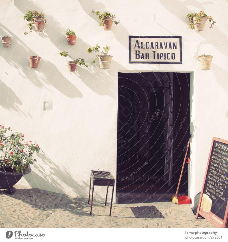 Bar Tipico [L] Tapas Plant Flower Pot plant Arcos de la Frontera Andalucia Spain Downtown Restaurant Wall (barrier) Wall (building) Facade Door Entrance Bright
