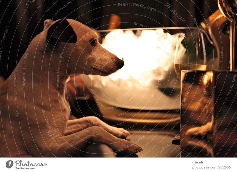 Dog Joy Animal Funny Glass Gold