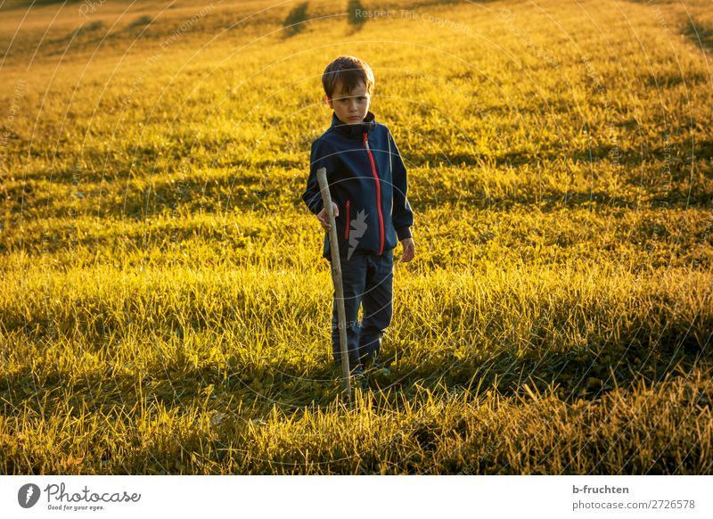 Child on a pasture with walking stick, sunset in autumn Contentment Trip Adventure Hiking 1 Human being Nature Sunlight Autumn Beautiful weather Grass Meadow