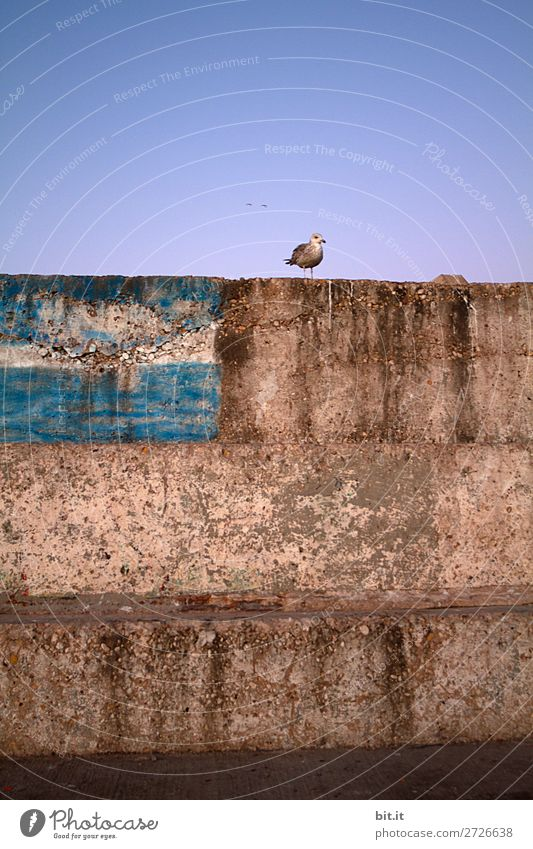 A seagull, already makes a spring Vacation & Travel Tourism Trip Adventure Far-off places Freedom Wall (barrier) Wall (building) Facade Happy Contentment