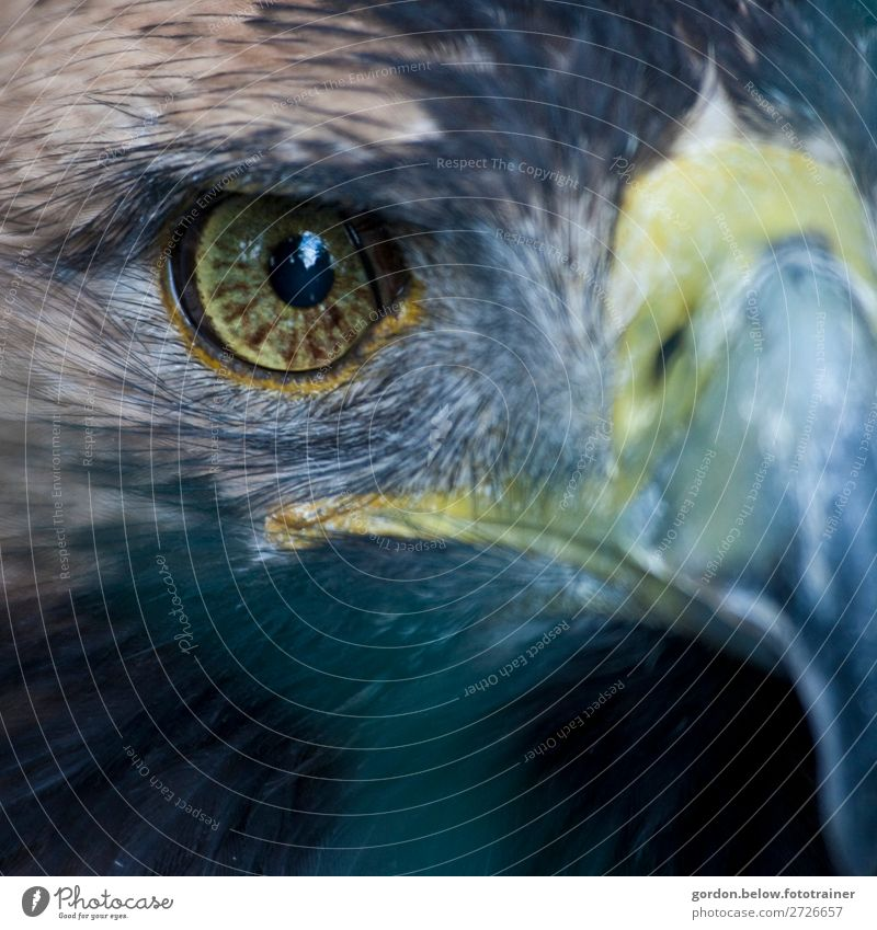 # Sight Nature Animal Wild animal Bird 1 Looking Exceptional Cool (slang) Exotic Gigantic Blue Brown Yellow Black Silver Turquoise Power Watchfulness Adventure