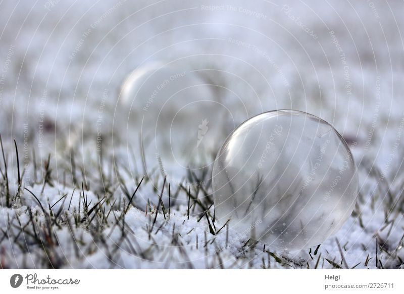 Soap bubbles in a slightly frozen state lie on a meadow with snow Environment Nature Plant Winter Ice Frost Snow Grass Garden Sphere Freeze Lie Exceptional