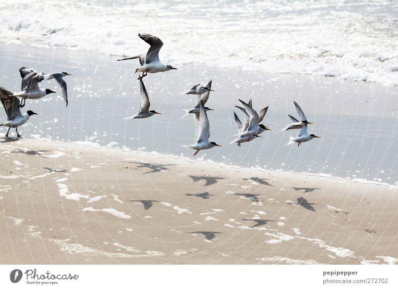 Summer Ocean Beach Animal Bird Waves Flying Group of animals Attachment Seagull