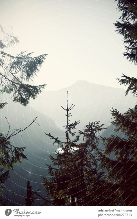 Sky Nature Tree Calm Landscape Mountain Horizon Alps