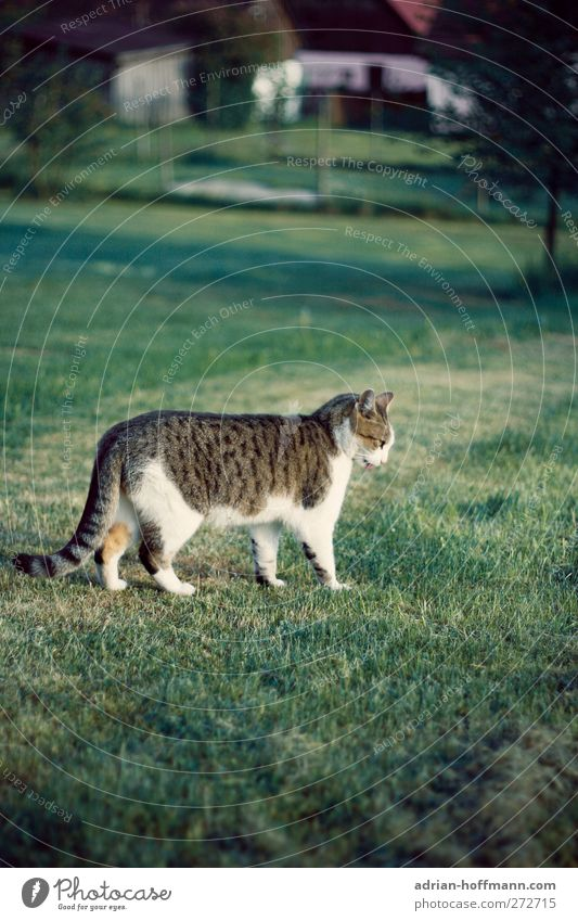 village hangover Nature Animal Grass Garden Meadow Pet Cat 1 Looking Happy Colour photo Exterior shot Day Animal portrait Profile Looking away