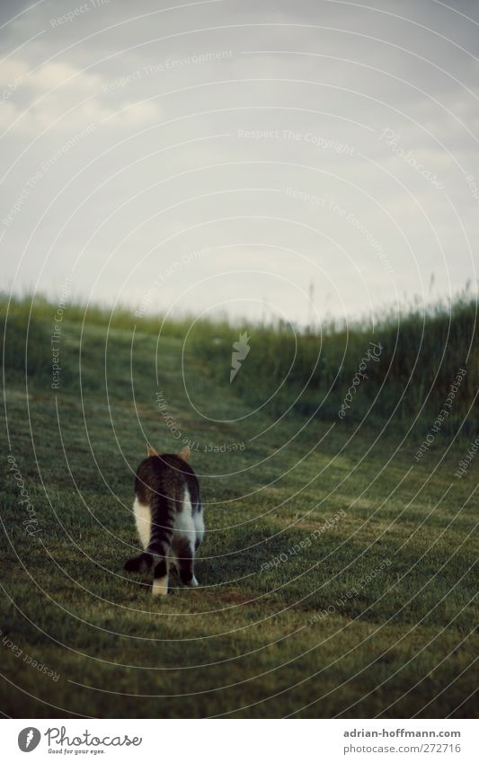 I'm going my own way... Nature Animal Grass Garden Meadow Pet Cat 1 Curiosity Colour photo Exterior shot Copy Space top Day Animal portrait Rear view