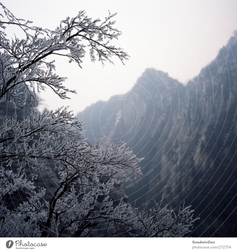 Nature Tree Plant Winter Far-off places Environment Cold Mountain Ice Moody Weather Climate Large Free Fresh Authentic
