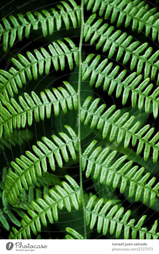 green fern plant leaves Green Plant Leaf Abstract Consistency Garden Floral Nature Decoration Exterior shot fragility background Winter Autumn spring Summer