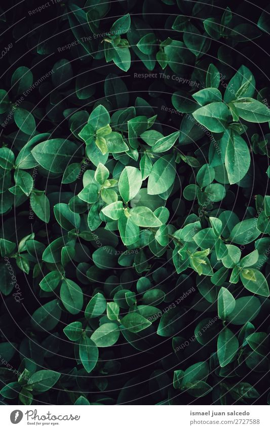 green plant leaves Plant Leaf Green Garden Floral Nature Decoration Abstract Consistency Fresh Exterior shot background Beauty Photography fragility spring