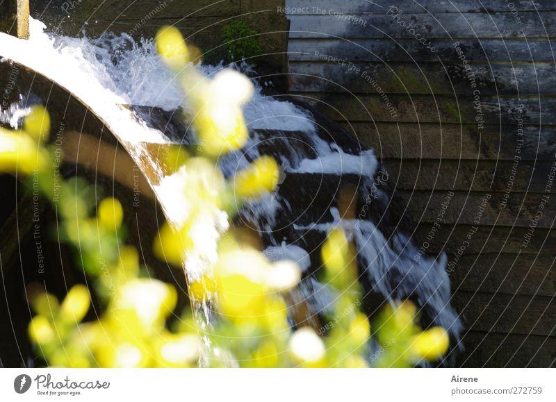 Hundertwasser Profession Miller Water mill Craft (trade) Renewable energy Hydroelectric  power plant Elements Plant Bushes Broom Brook Village Deserted