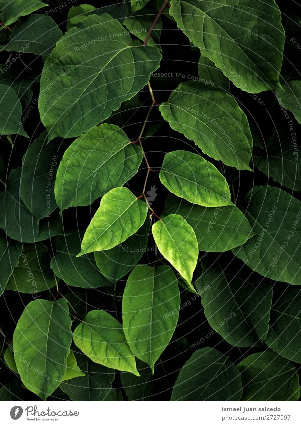 green plant leaves Nature Summer Plant Green Leaf Winter Autumn Garden Decoration Fresh Beauty Photography Consistency Floral