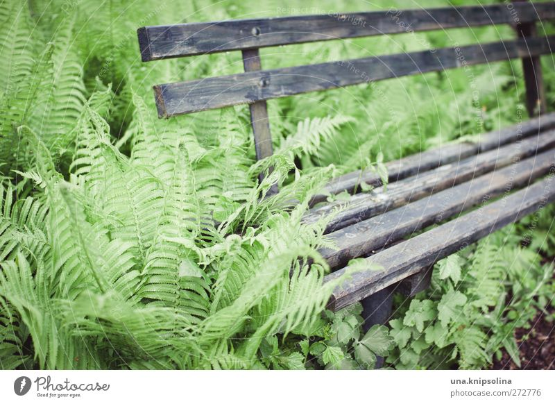 Place in the green Environment Nature Plant Fern Foliage plant Garden Wood Old Natural Gray Green Transience Growth Bench Overgrown Colour photo Subdued colour