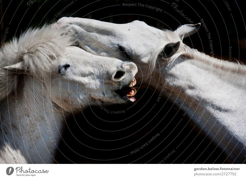 #Advertising? Joy Happy Vacation & Travel Trip Adventure Freedom Animal Pet Horse 2 Baby animal Observe Touch Movement Argument Large Anger Blue Brown Pink