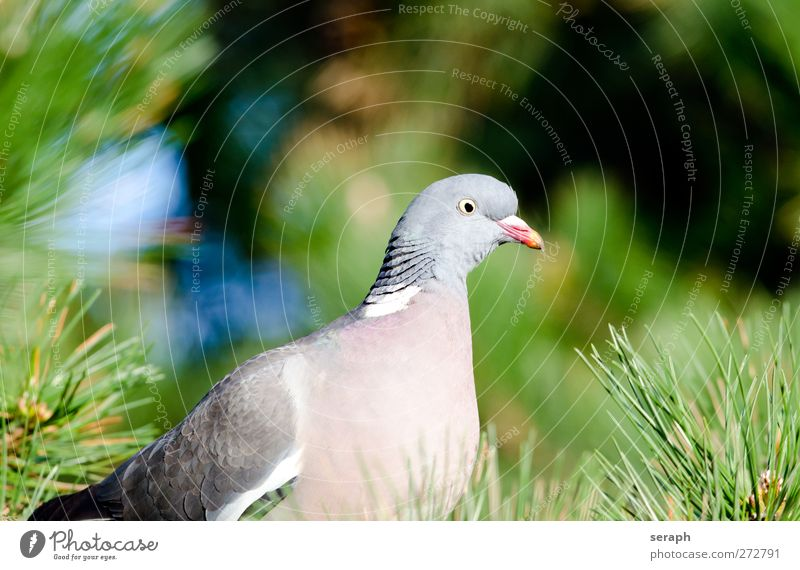 Nature Green Tree Animal Freedom Bird Park Sit Observe Branch Peace Pigeon Plumed Ornithology Resting