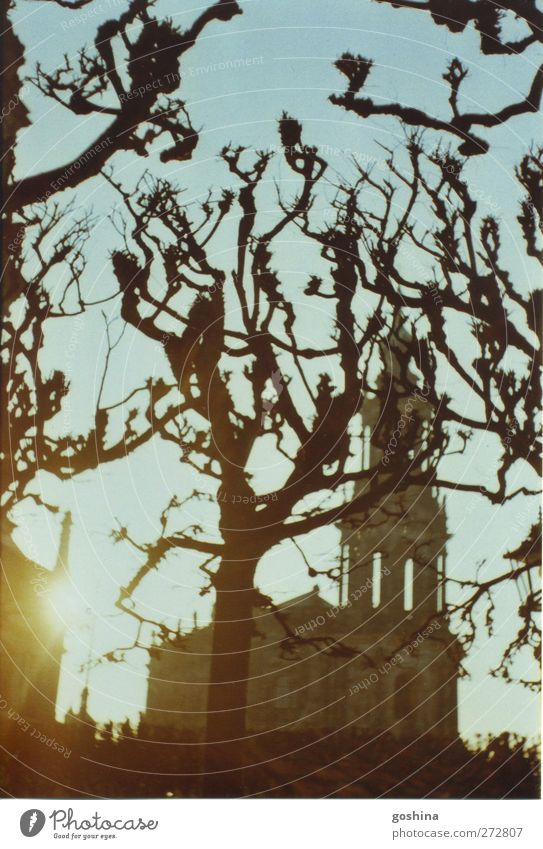 gnarled Nature Winter Tree Park Town Church Tourist Attraction Stone Wood Calm Dream Moody Colour photo Exterior shot Polaroid Evening Twilight Silhouette
