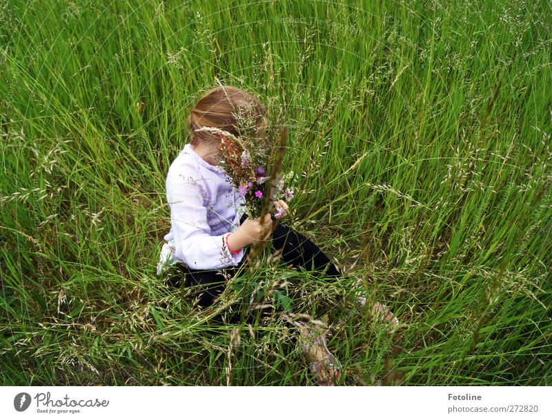 Human being Child Nature Hand Green Plant Summer Girl Environment Meadow Feminine Grass Hair and hairstyles Head Bright Body
