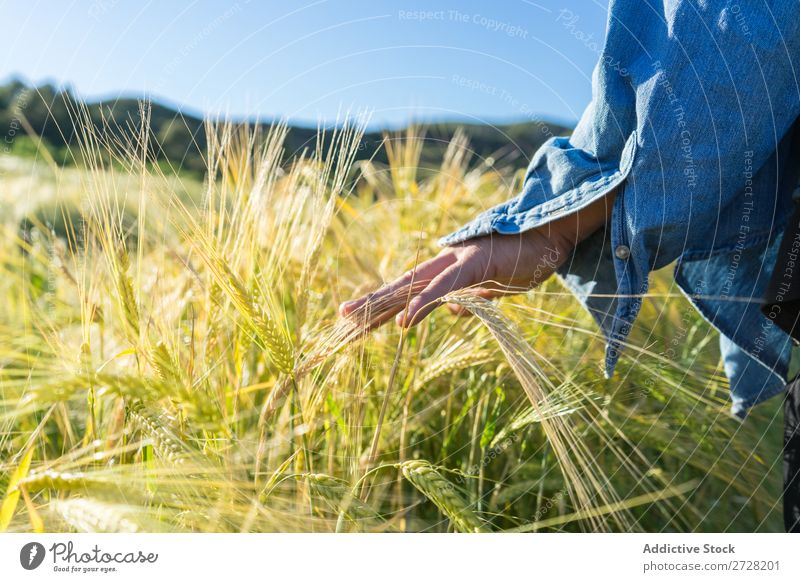 Crop person walking in summer field Human being Field Summer Touch Nature Lifestyle Landscape Organic