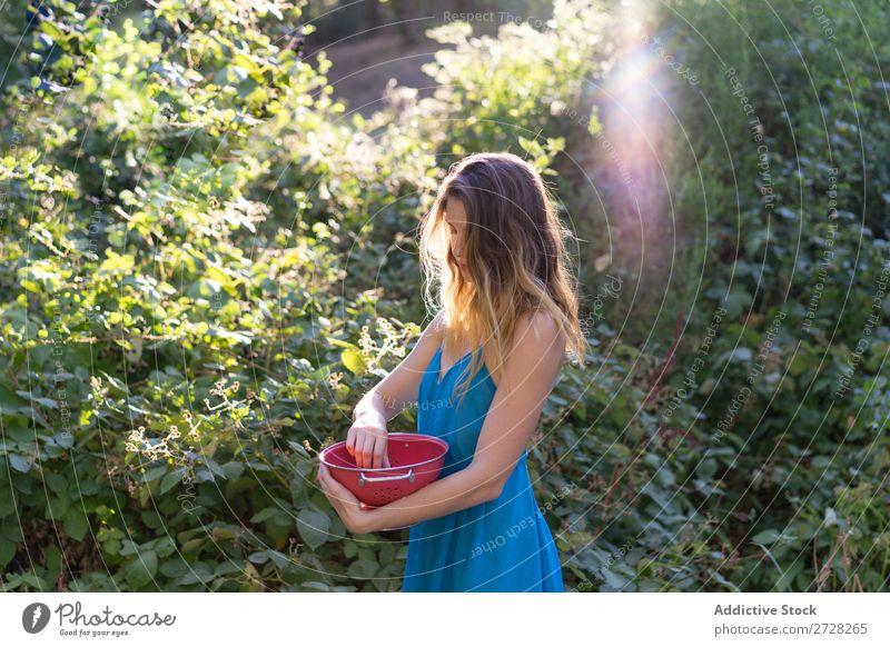 Girl picking berries in backyard Woman Garden Berries Harvest Sweet Agriculture Gardener Nature