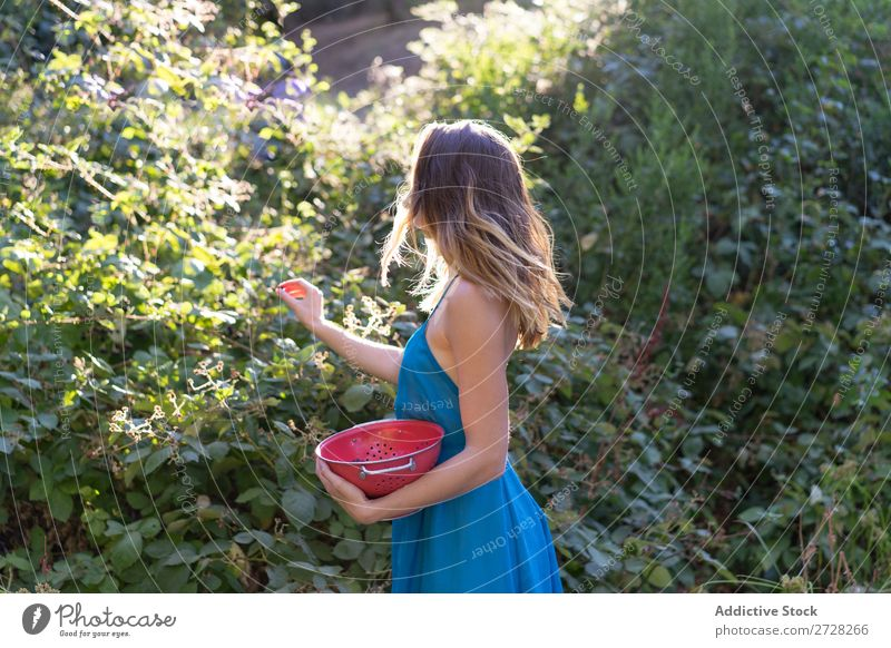 Girl picking berries in backyard Woman Garden collecting Berries Harvest Sweet Agriculture Gardener Nature Mature Organic Natural Fresh Bushes Vitamin orchard