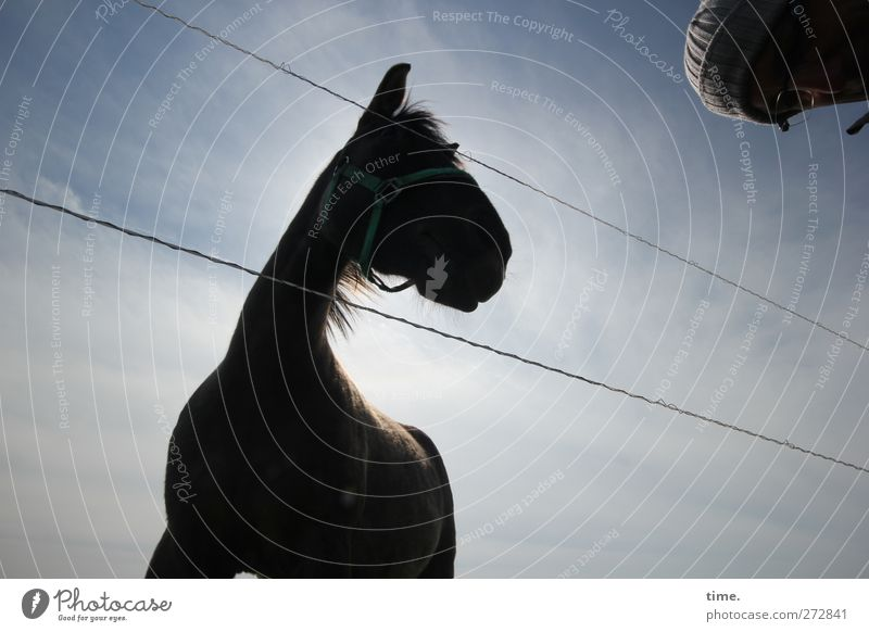 Human being Sky Animal Clouds Head Moody Adventure Observe Communicate Horse Curiosity Trust Steel cable Cap Watchfulness Relationship