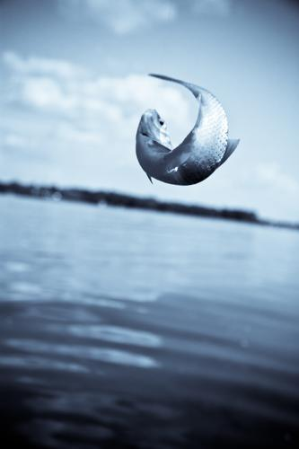 Sky Nature Blue Water Relaxation Animal Freedom Lake Horizon Success Fish Catch Fishing (Angle) Silver Captured